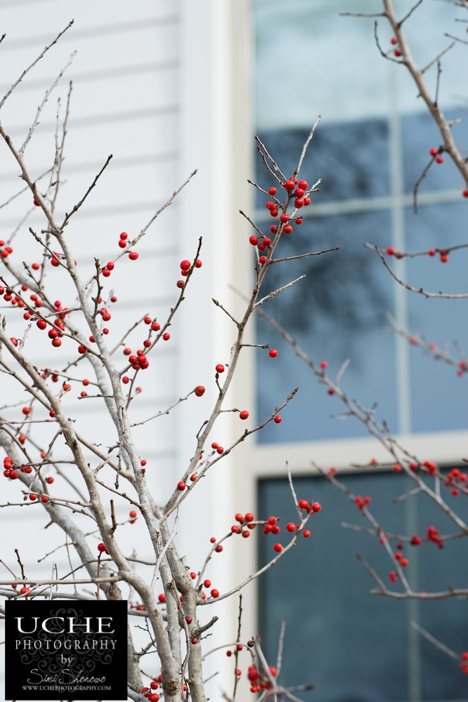 20150130.030.365.a splash of red