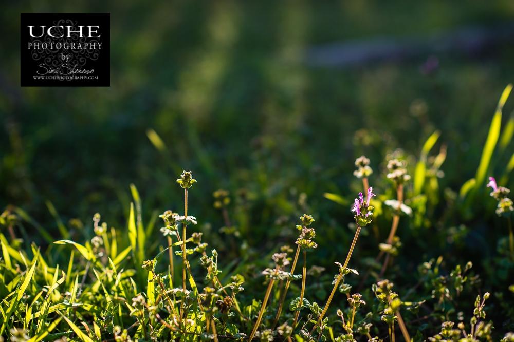 20150210.041.365.weeds aglow