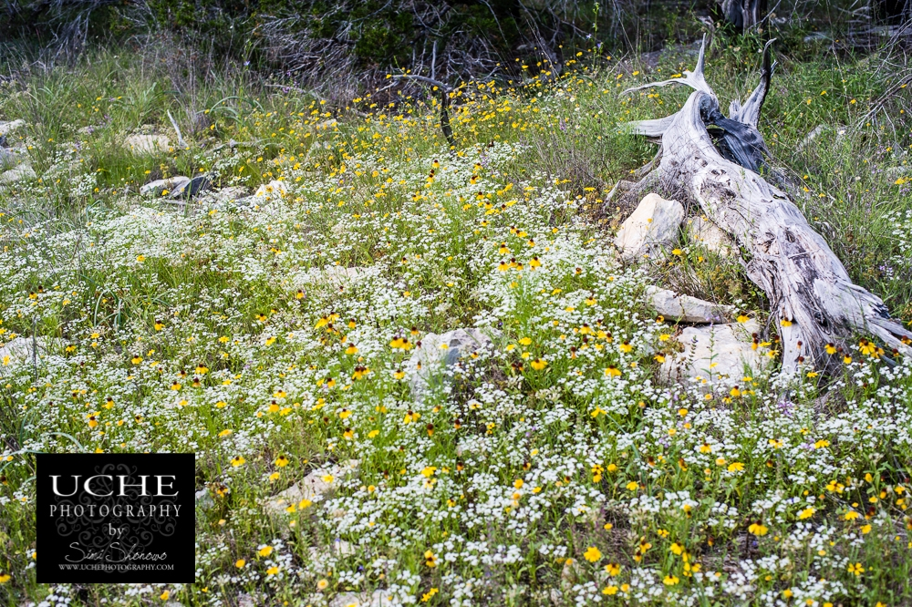 20150501.121.365.log among flowers.jpg