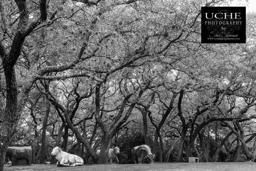 20150505.125.365.cow garden.jpg