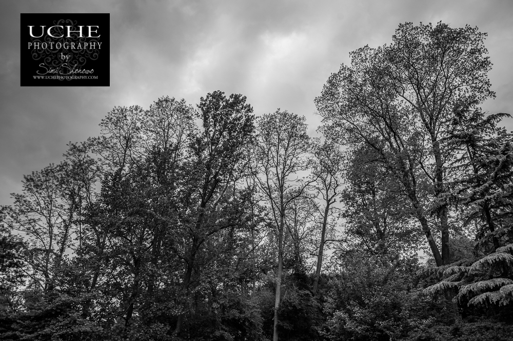 20150513.133.365.canopy in black and white