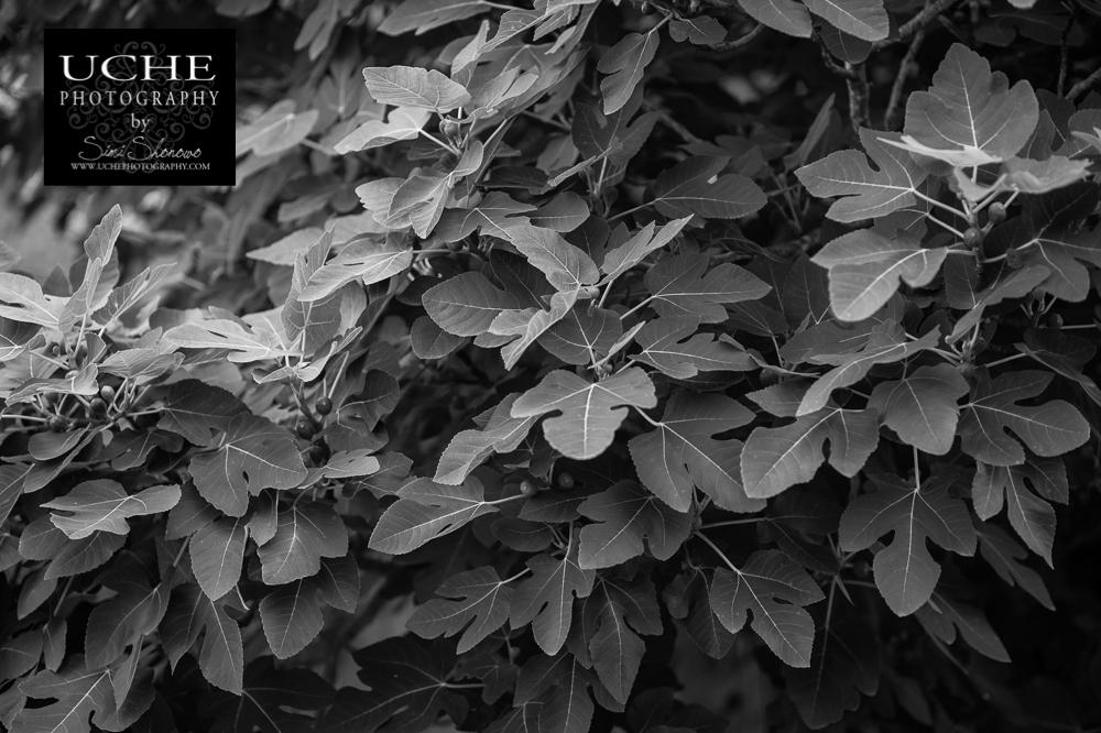 20150520.140.365.^^leaf^^leaf^^