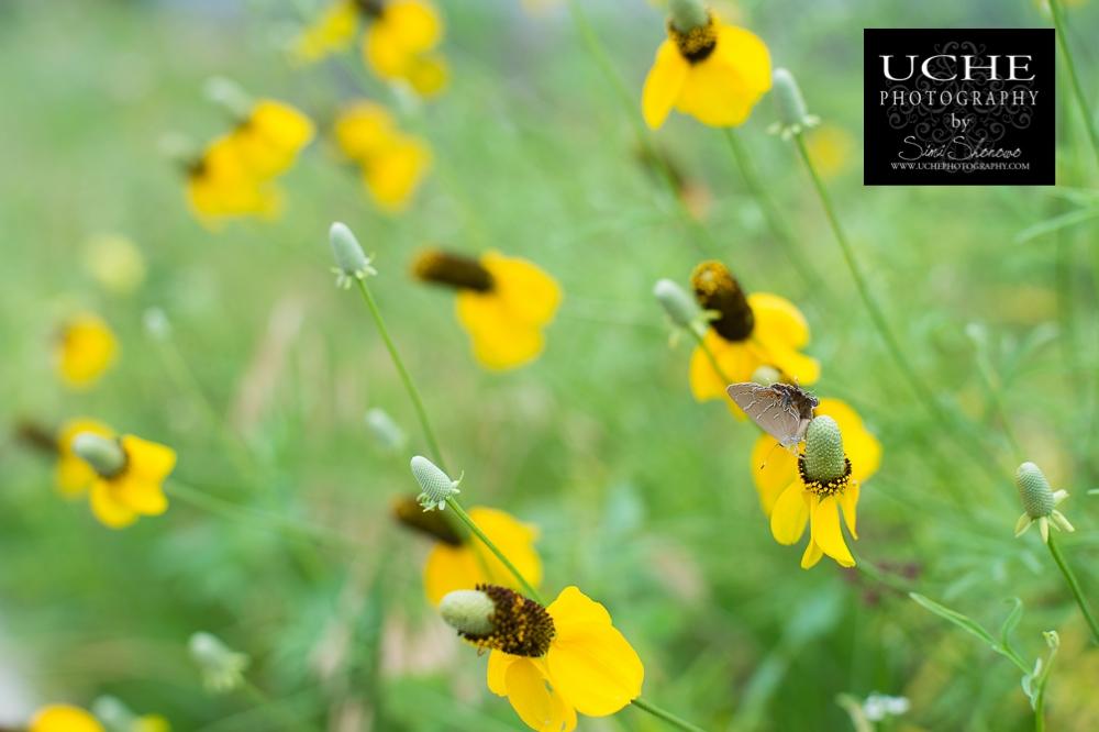 20150522.142.365.pollen harvester