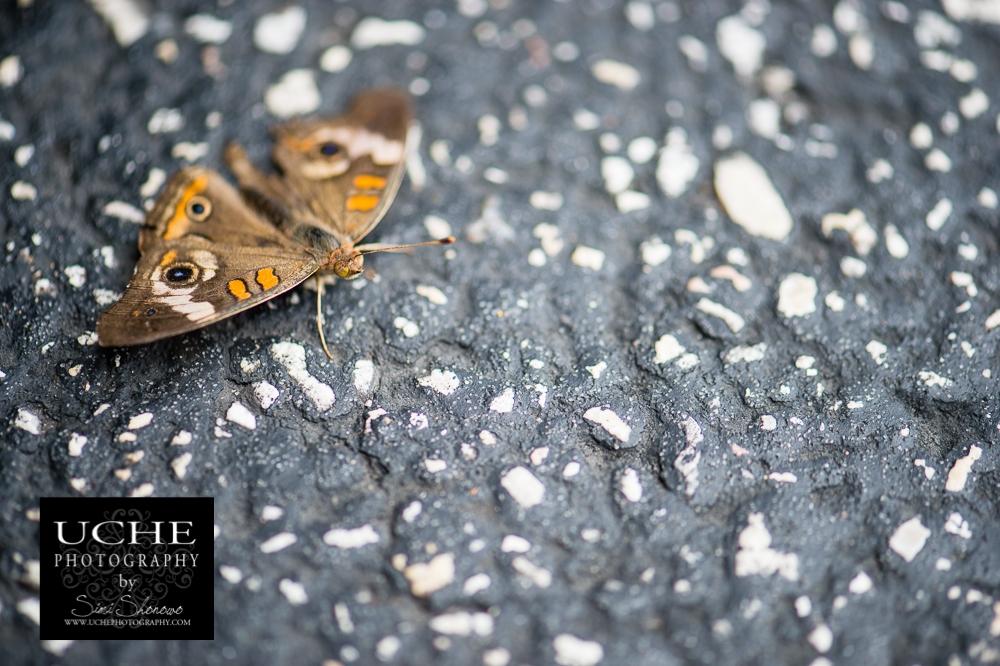 20150524.144.365.asphalt moth