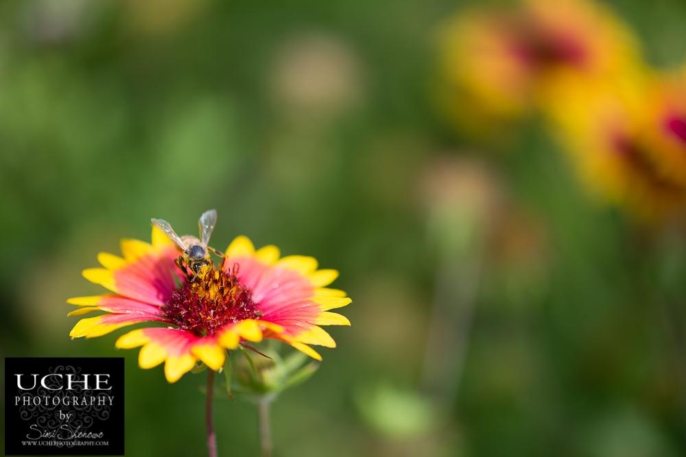 20150531.151.365.getting pollen