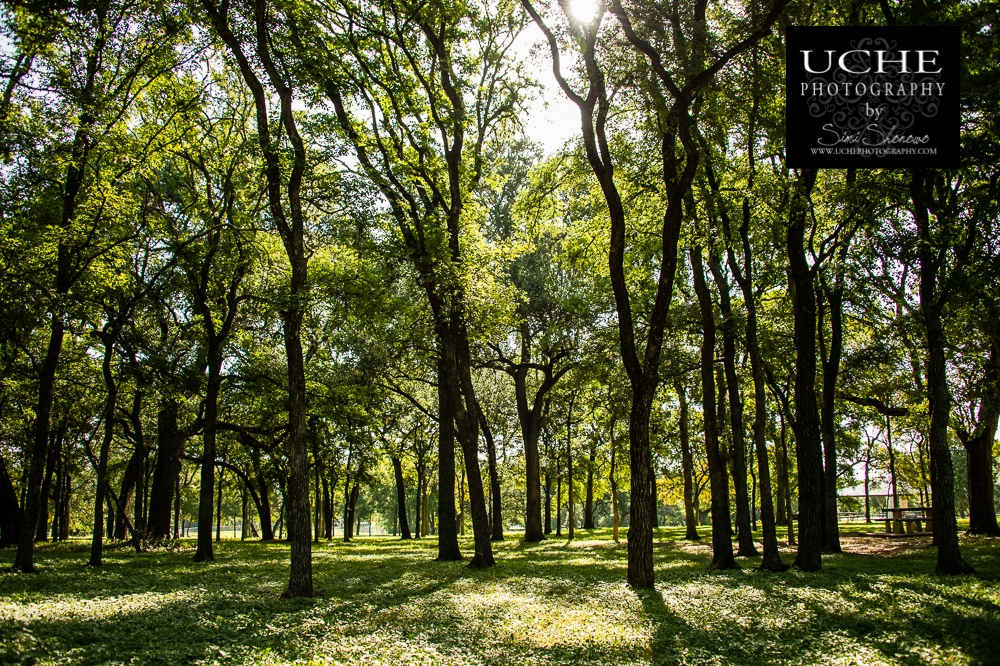 20150713.194.365.shining woods