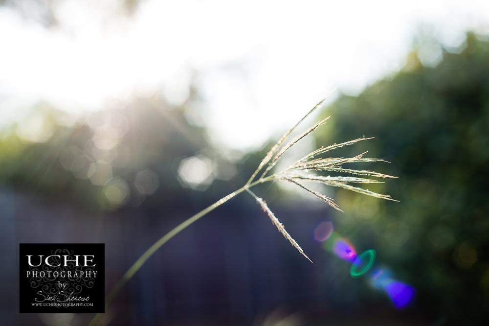 20150921.264.365.twig flare