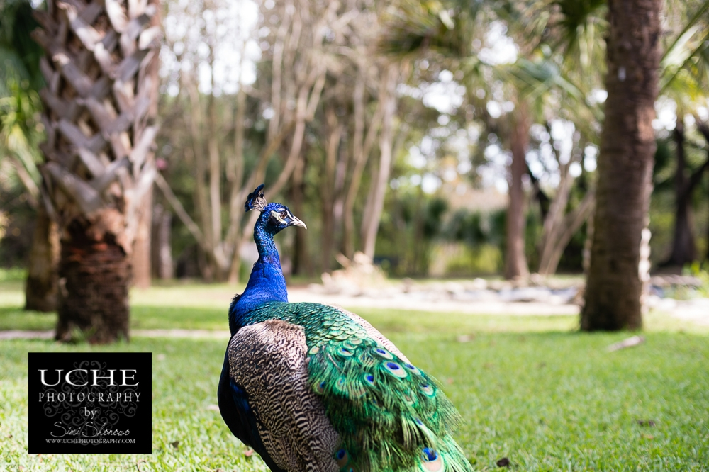 20161110.315.365.peacock kingdom survey