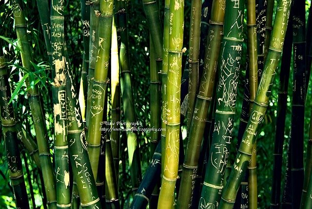 love_in_bamboo