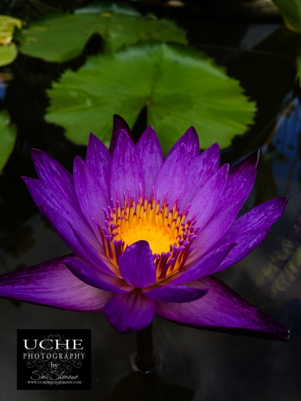 20160709.191.mobile365.open lotus