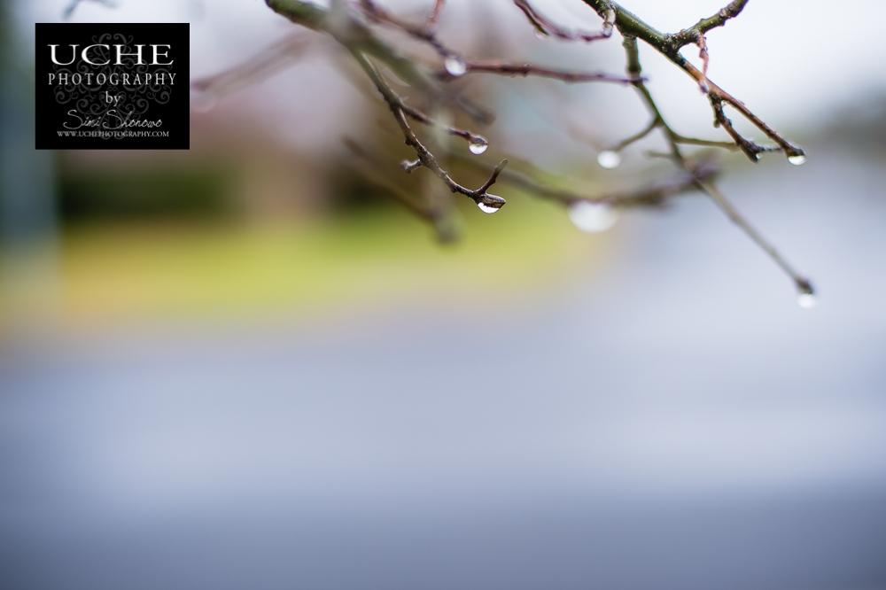 20150309.068.365.rainy day branches.jpg