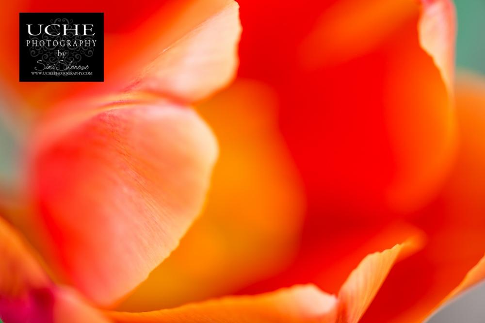 20150412.102.365.flower's edge.jpg