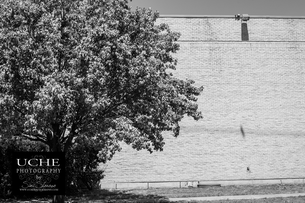 20150823.235.365.tree beside bird on wall