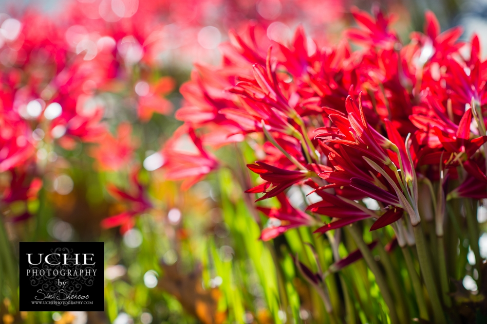 20151028.301.365.fall flower gift