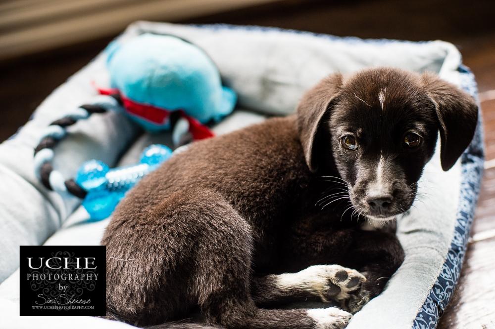 20151106.310.365.puppy eyes