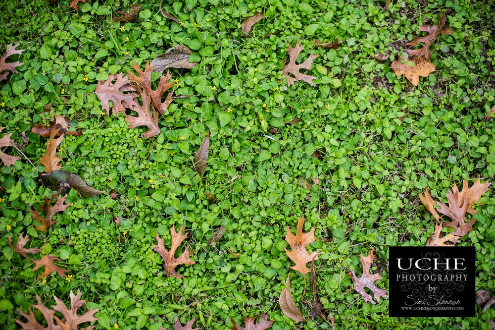 20151125.329.365.fall lawn