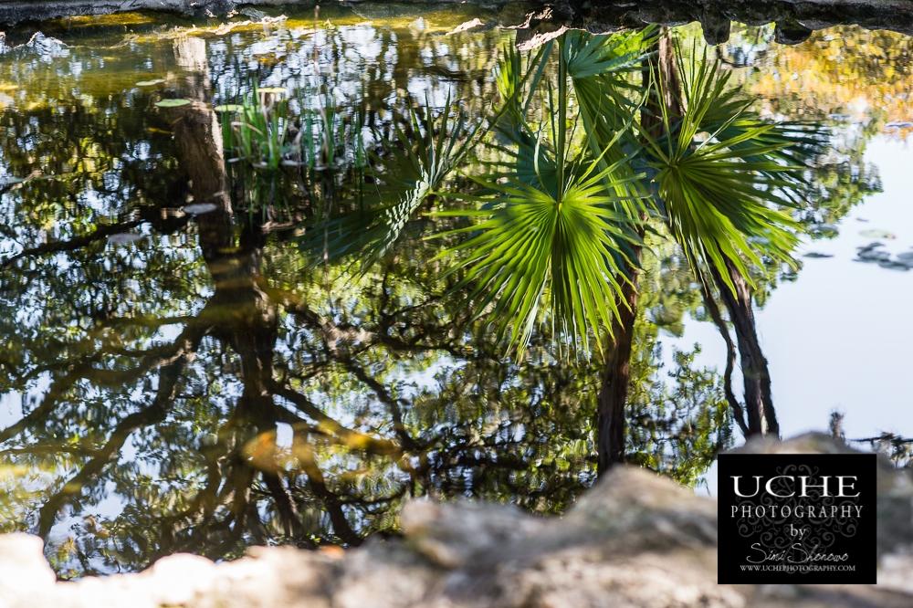 20151203.337.365.watery palms