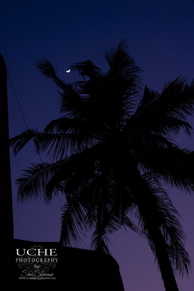 20151216.350.365.tropically framed moon