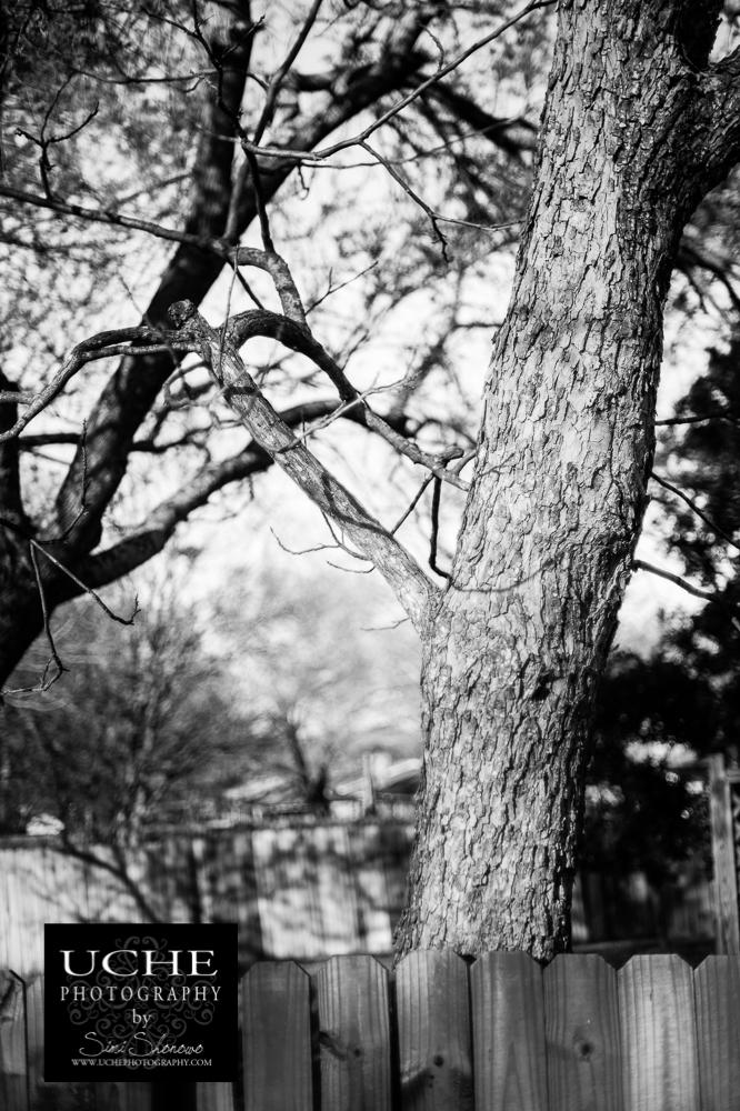 20150305.064.365.tentacled tree!.jpg