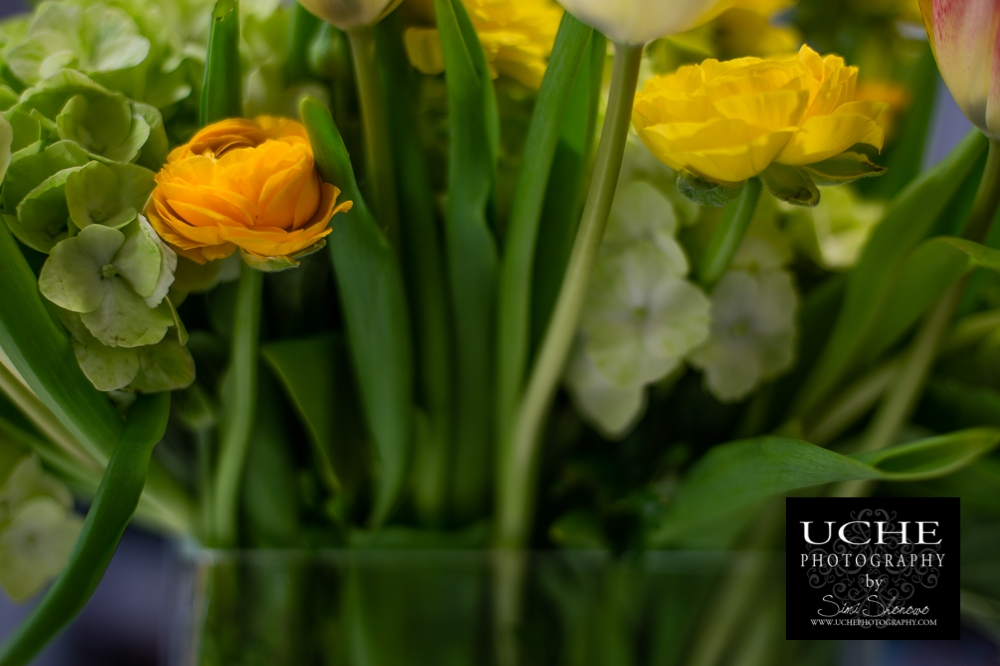20150312.071.365.a flower or two.jpg