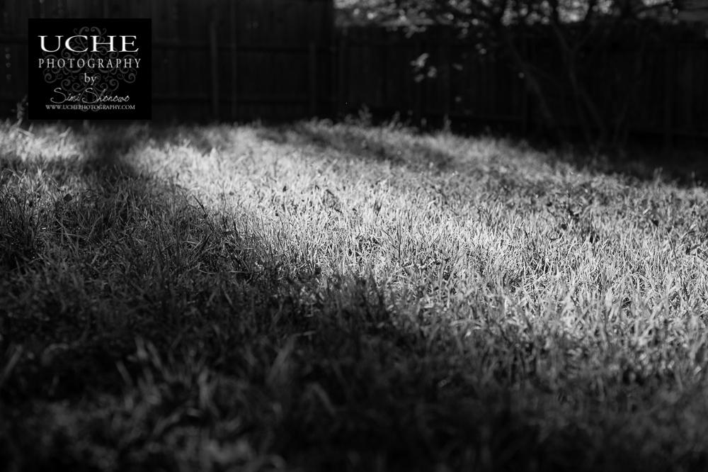 20150328.087.365.light spilt in.jpg