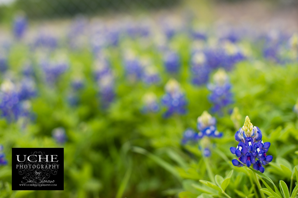 20150330.089.365.one bluebonnet two bluebonnet three bluebonnet four....jpg