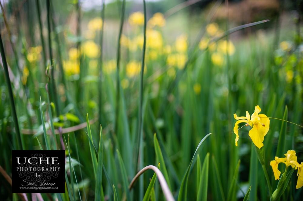 20150408.098.365.river lilies.jpg