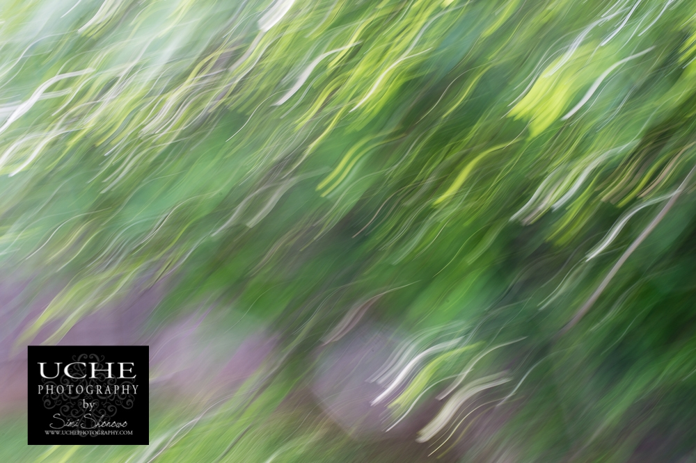 20150410.100.365.painting green.jpg