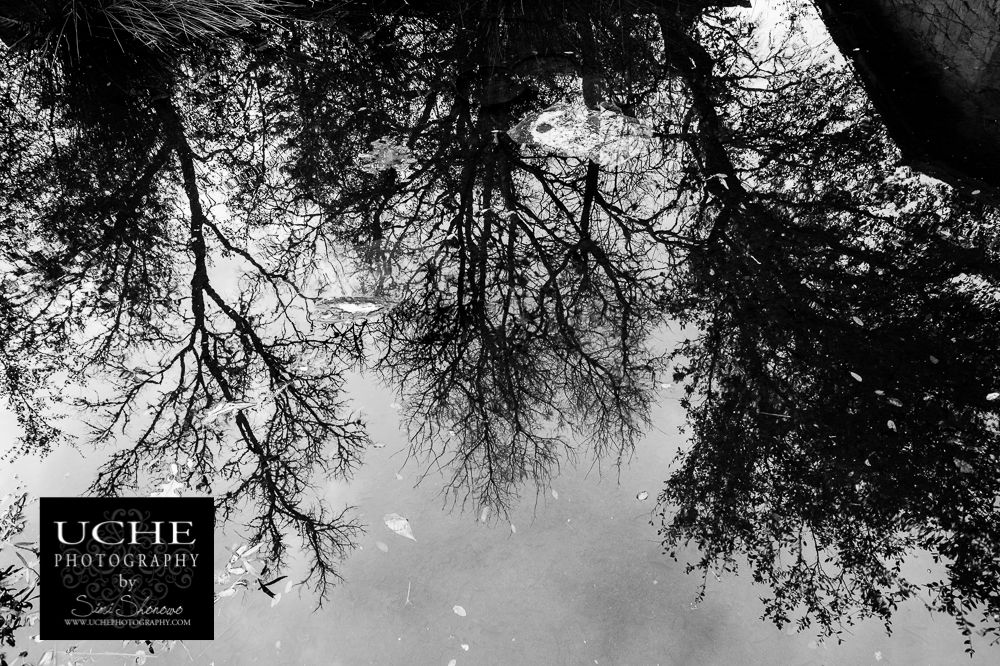 20160119.019.365.bare tree fall