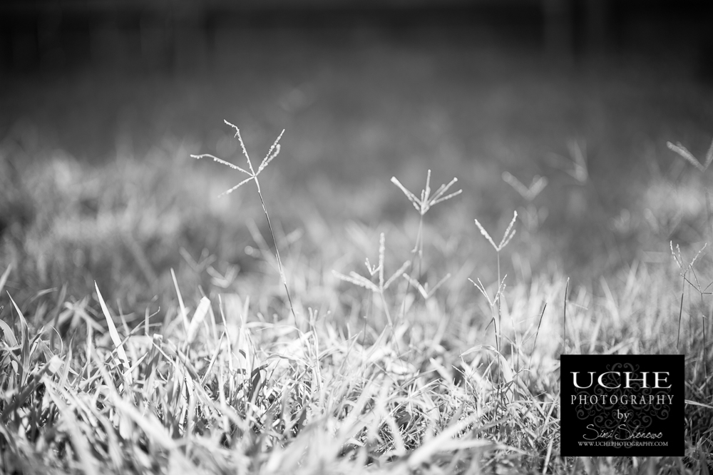 20160810.223.365.sticking out of grass