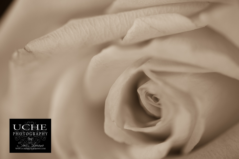 20160919.263.365.petal flow
