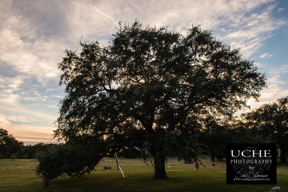 20161022.296.365.wedding sunset tree