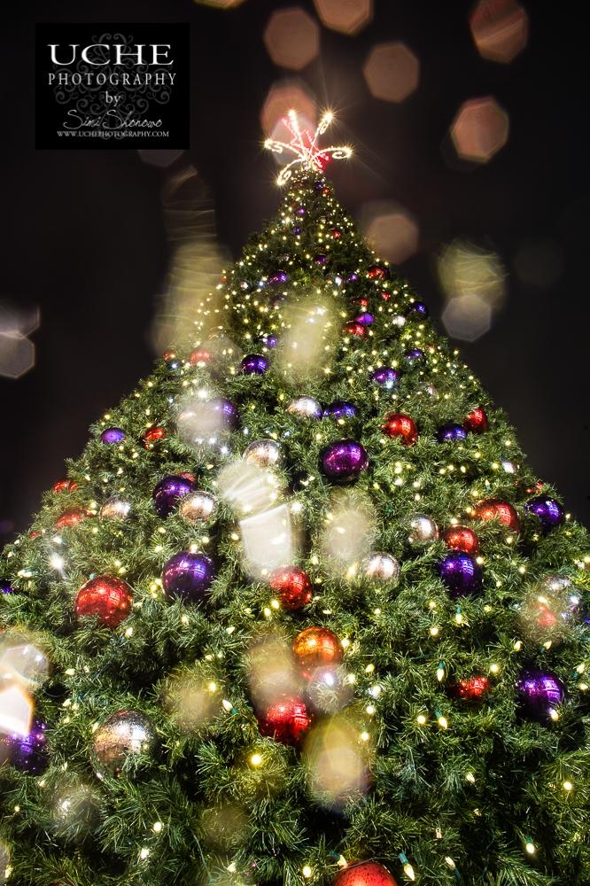 20161202.337.365.Christmas tree lookup