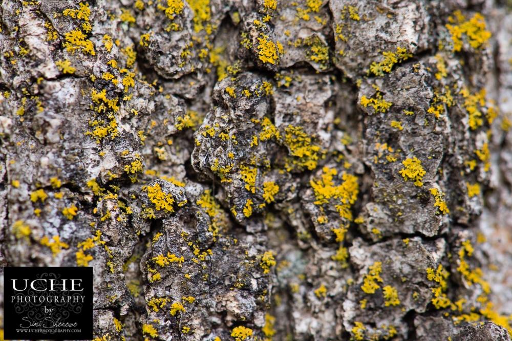 20190106.006.365.lichen fascination